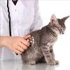 Ветеринарные клиники в Саяногорске